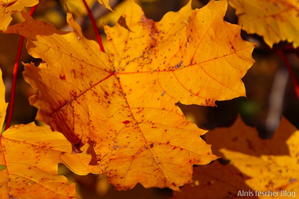 Meine Herbstfavoriten