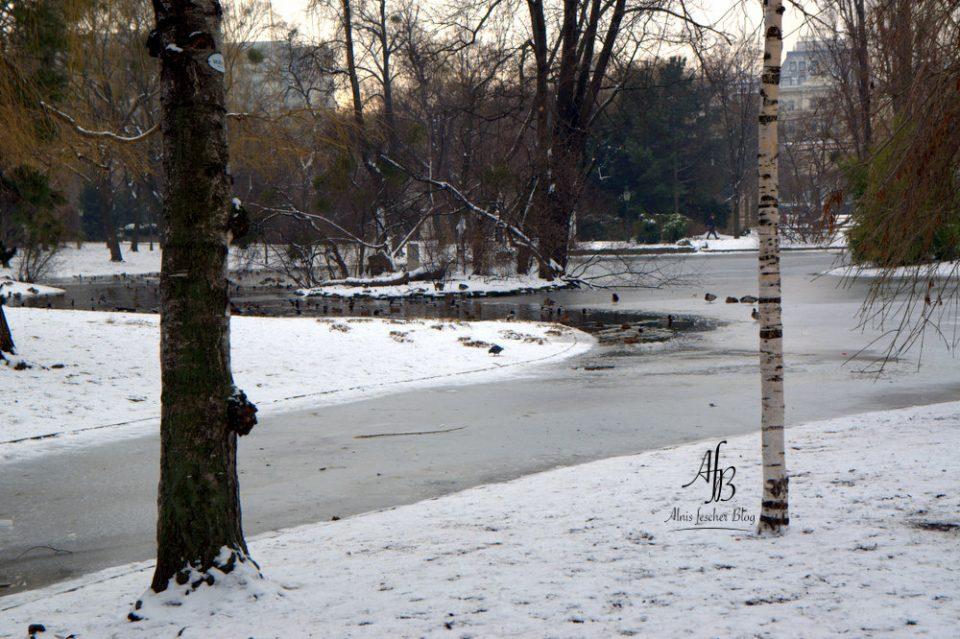 Alnis-Winter-im-Wiener-Stadtpark-13