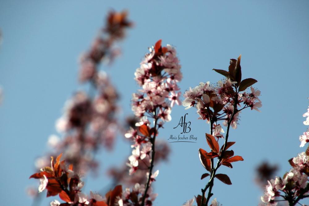 Zartes Kaschmir im Blütenmeer