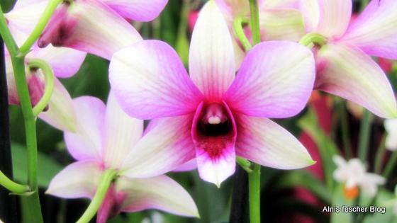 Orchideenausstellung im Stift Klosterneuburg