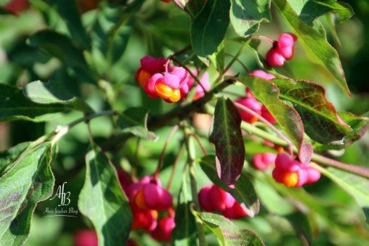 Herbstliches Bilderbuch
