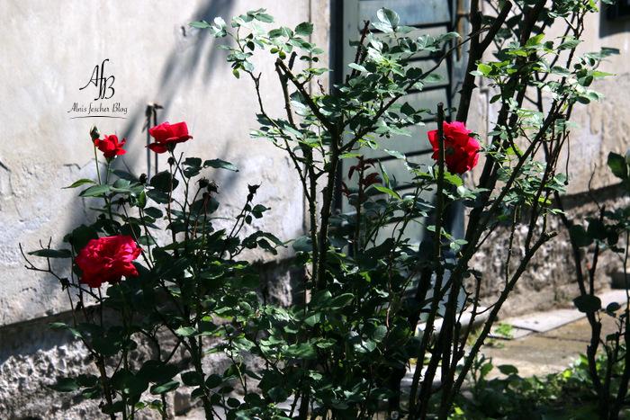 Shooting im alten Schlossgarten Laxenburg