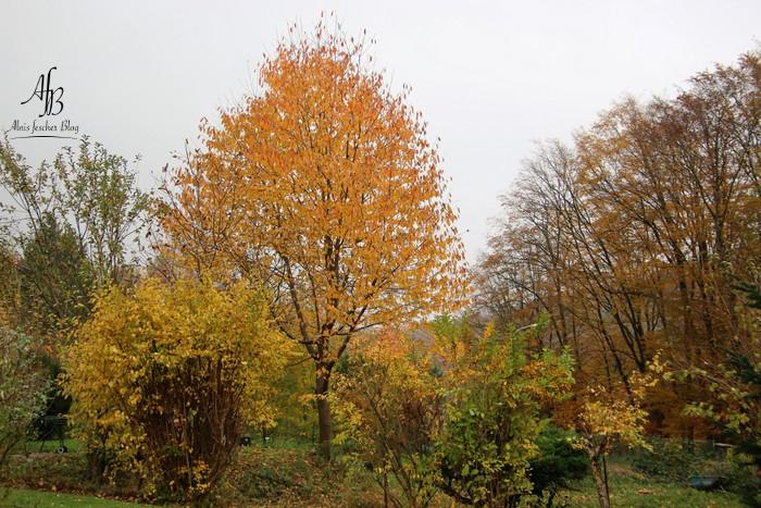 Gemütlich in den goldenen Herbst