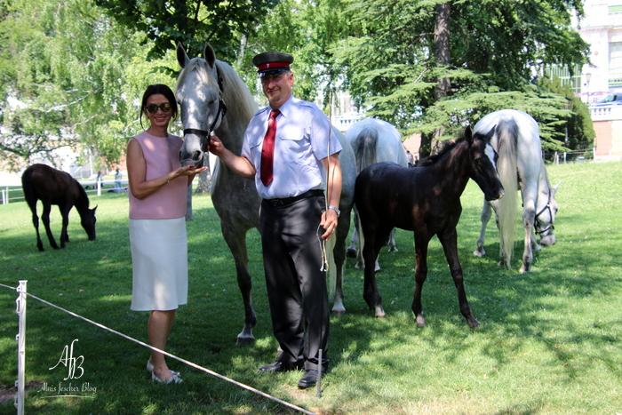 Piber meets Vienna - Fohlen im Burggarten